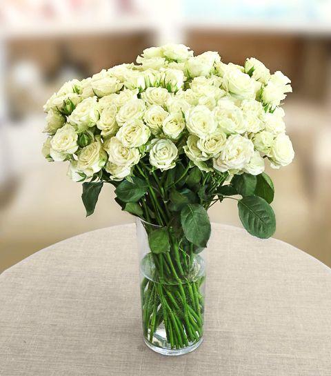 фото роза кустовая белая